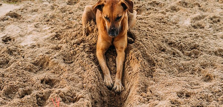 5 Tips On How to Stop the Dog From Diggin