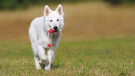 5 Fun Brain Games For Dogs
