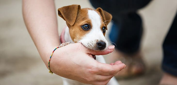 How to Stop a Puppy from Biting and Nipping – All You Need to Know