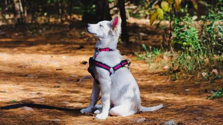 How to Teach Your Dog to Stay: A Simple Step-by-Step Guide