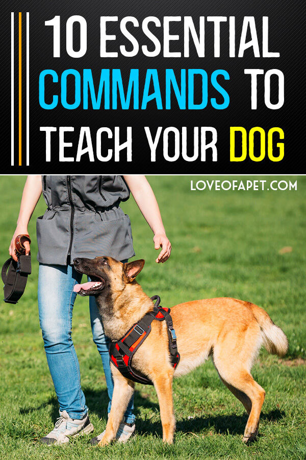 10 Basic Commands to Teach Your Dog