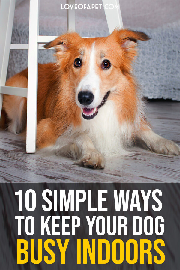 10 Simple Ways to Keep Your Dog Busy Indoors