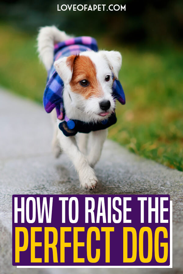 10 Steps To Raising The Perfect Dog