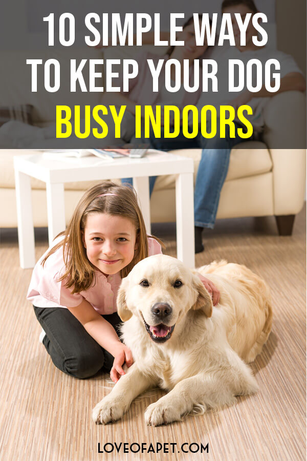 10 Ways to Keep Your Dog Happy and Busy Indoors