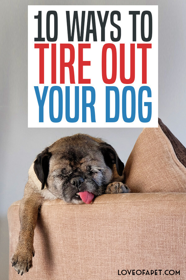 10 Ways to Tire Out Your Dog