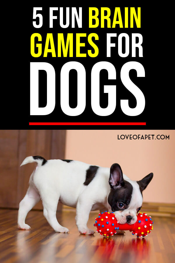 5 Brain Games to Play with Your Dog