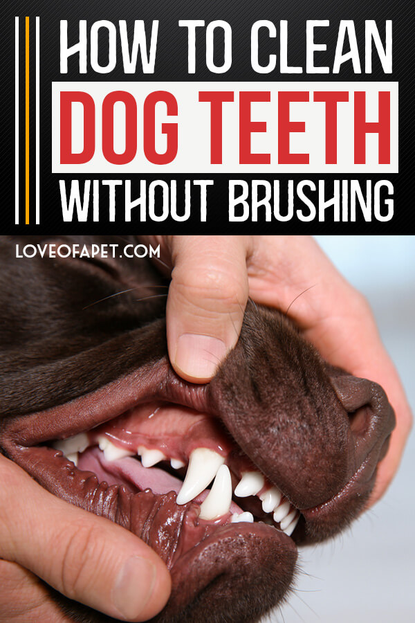 5 Easy Ways To Clean Your Dog's Teeth Without Brushing