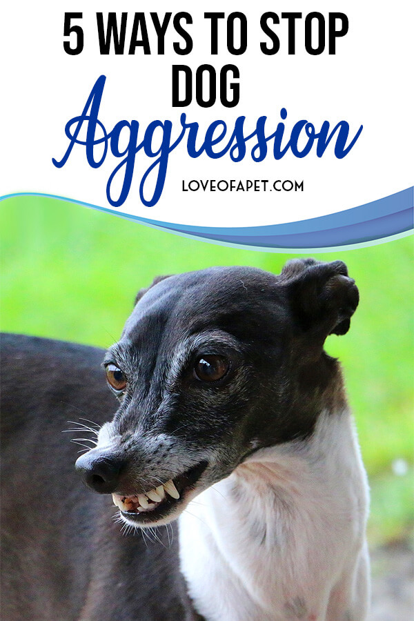 5 Ways to Stop Dog Aggression