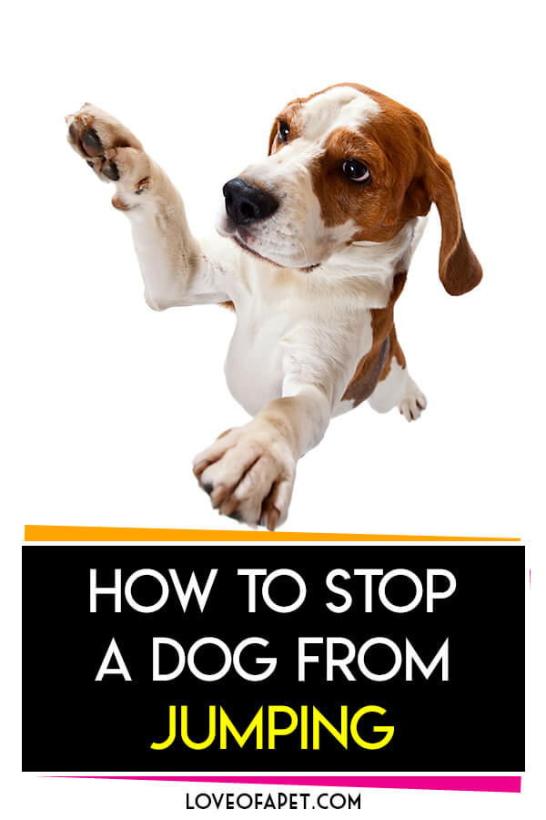 6 Easy Ways to Stop a Dog From Jumping