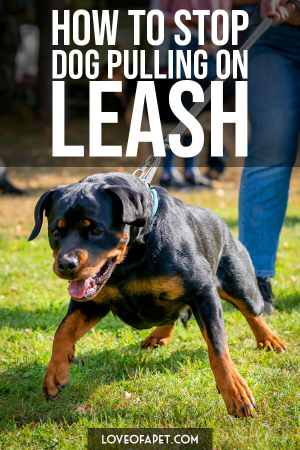 8 Tips To Stop Your Dog From Pulling On The Leash