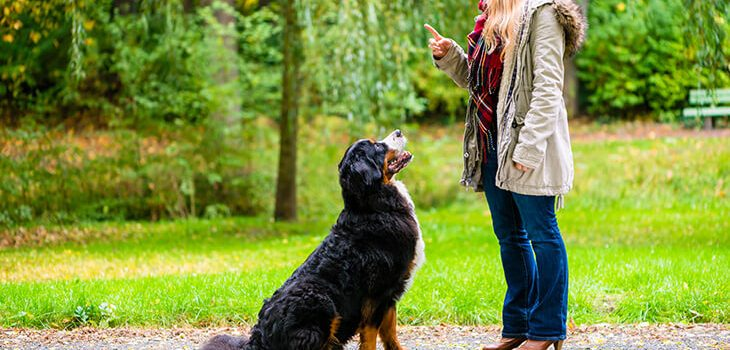 10 Essential Commands to Teach Your Dog