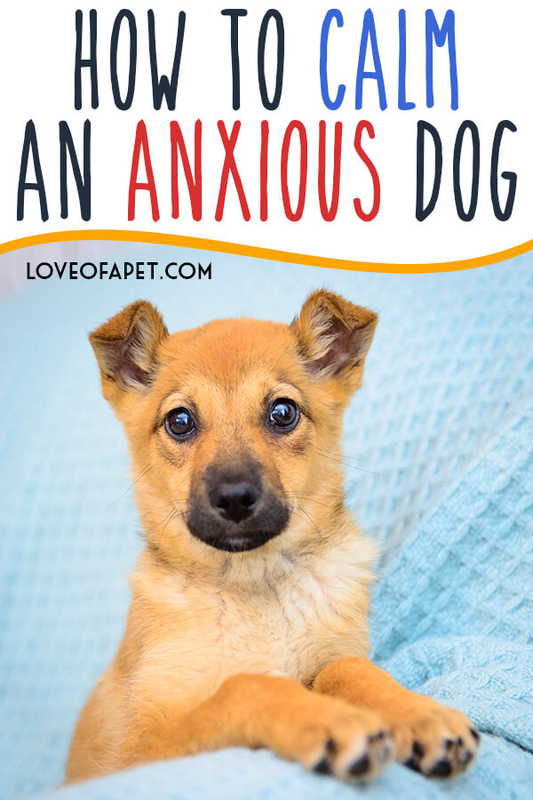 How to Calm Dog Anxiety and Dog Fear