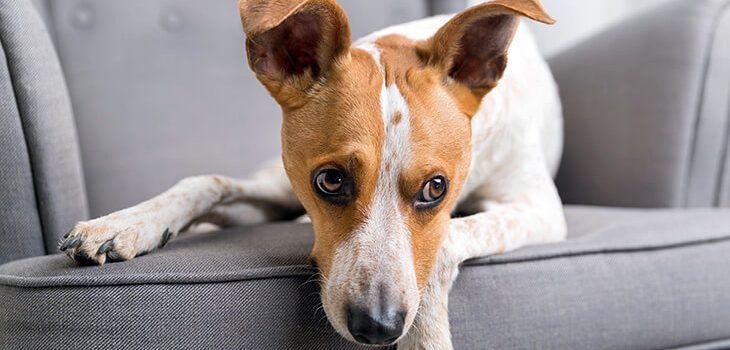 How to Calm an Anxious Dog: 6 Methods