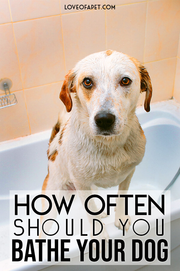 Things That You Will Need to Bathe Your Dog