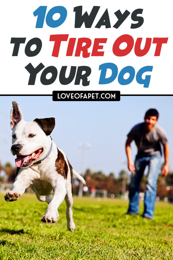 Tips and Tricks for Tiring Out Your Dog