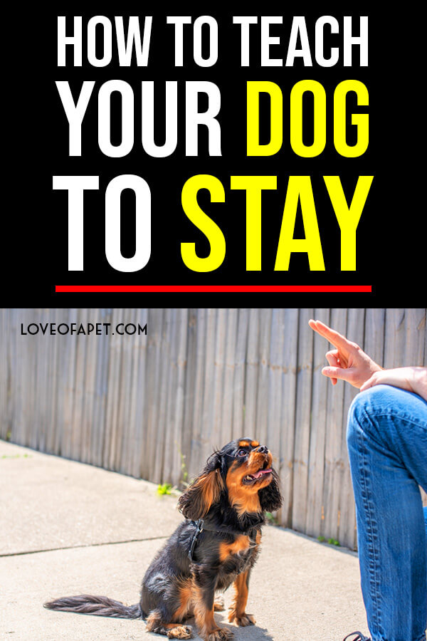 Your Guide to Teaching Your Dog to Stay