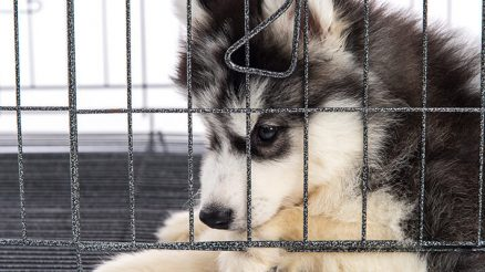 4 Steps To Crate Training a Pup