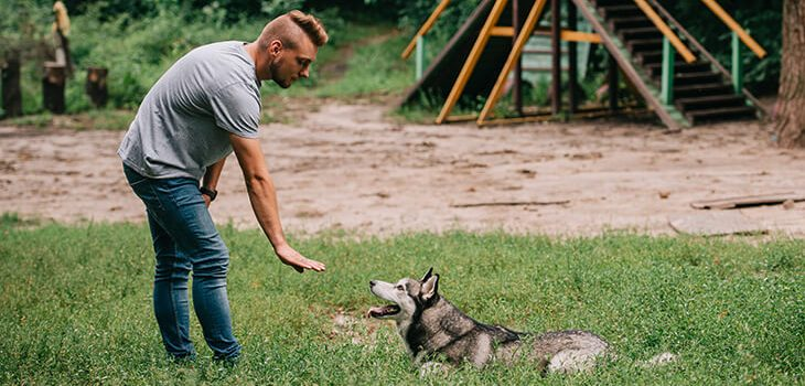 Dog Training With Hand Signals: What You Need to Know?