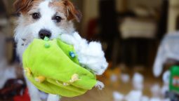 11 Tips to Stop Destructive Chewing in Dogs