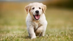 How to Teach a Puppy Its Name in 9 Easy Steps