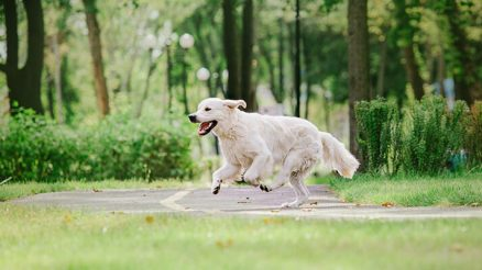 7 Tips on How to Train Your Dog Not to Run Away
