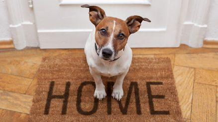 How to Train Your Dog to Greet Visitors: Methods & Tips