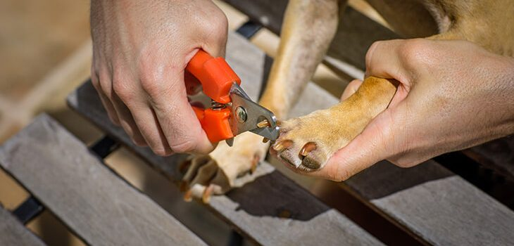 How to Trim Dog Nails at Home