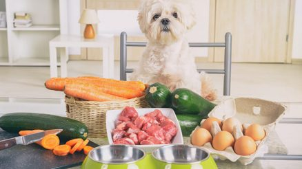 A List of Human Foods Dogs Can and Can't Eat