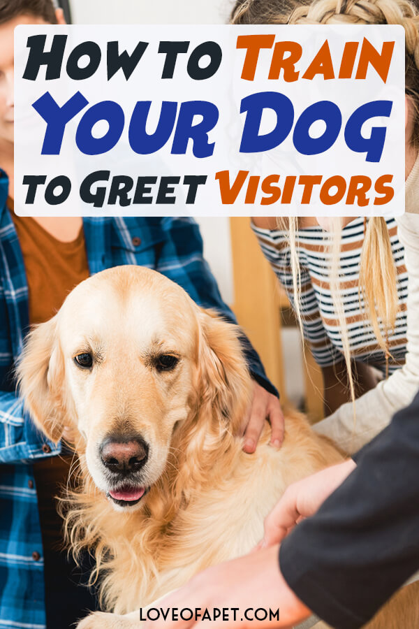 3 Methods on How to Train Your Dog to Greet Visitors