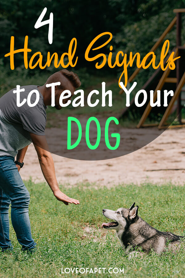 4 Hand Signals to Teach Your Dog