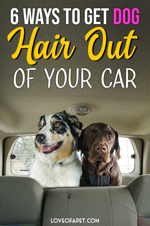 6 Ways To Get Dog Hair Out Of Your Car