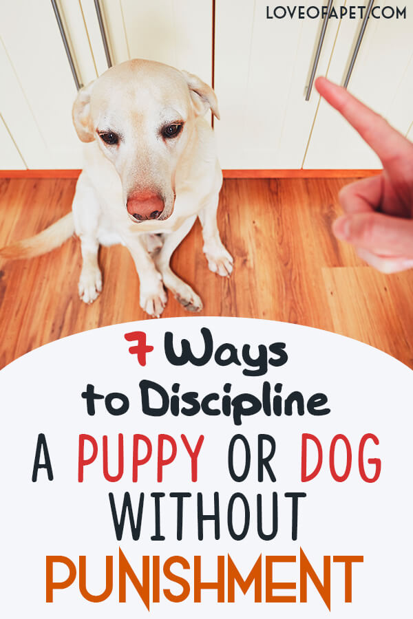 7 Ways to Discipline A Puppy Or Dog Without Punishment