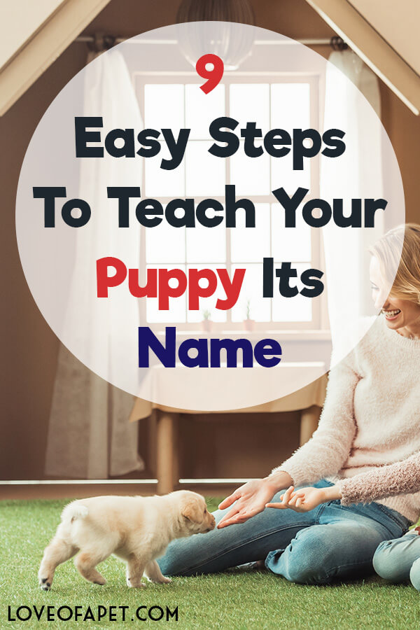 9 Easy Steps to Teach Your Puppy Its Name