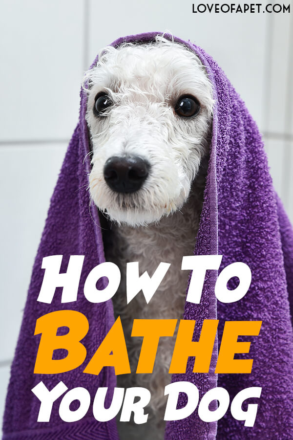 Everything You Should Know About Bathing Your Dog