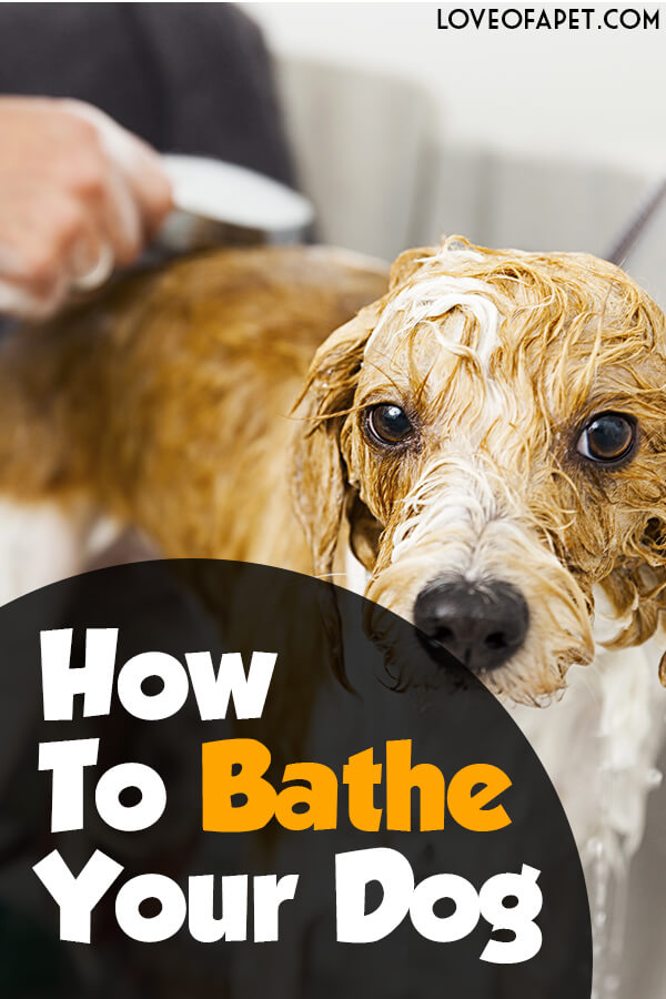 How to Bathe Your Dog at Home (Beginner's Guide)