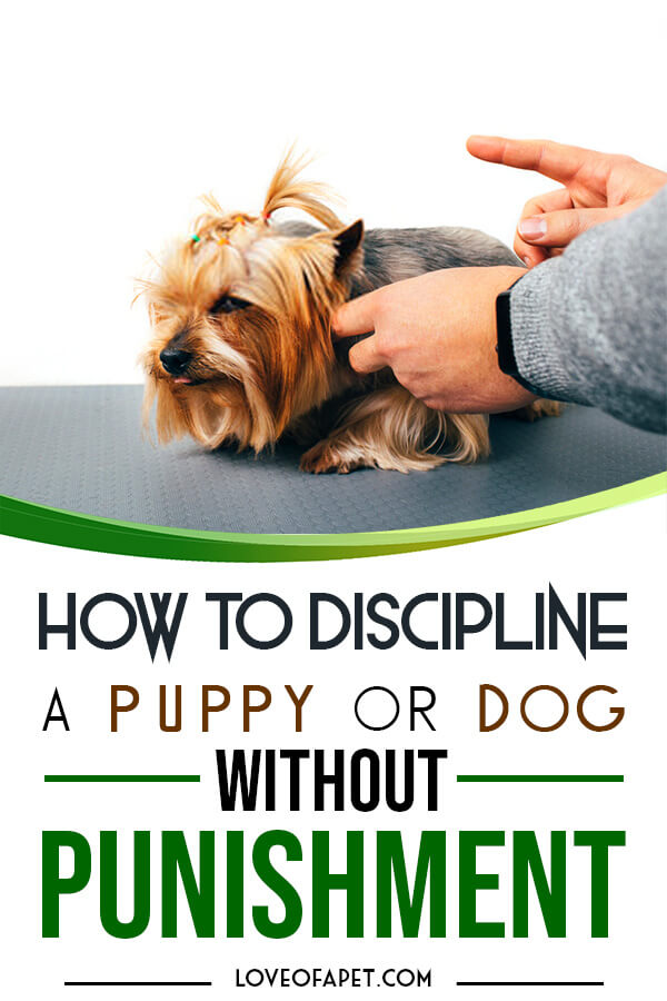 How To Discipline A Puppy Or Dog Without Punishment