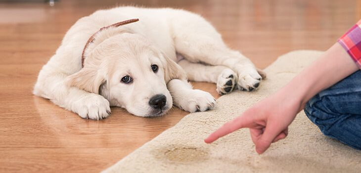 How To Stop Your Dog From Peeing In The House