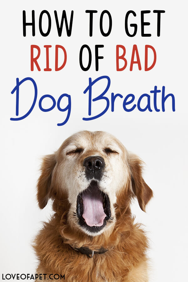 How to Get Rid of Bad Dog Breath: Treatments and Prevention