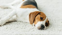 How to Tell If a Dog Is in Pain and What You Can Do to Help