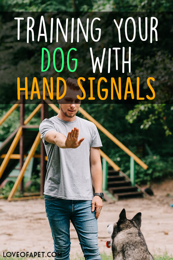 Training Your Dog With Hand Signals