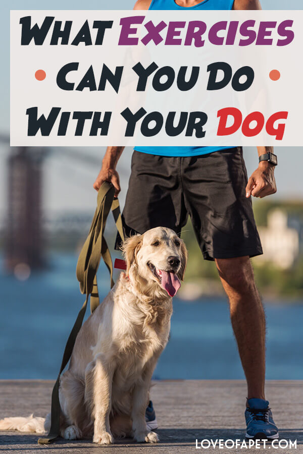 What Exercises Can You Do With Your Dog