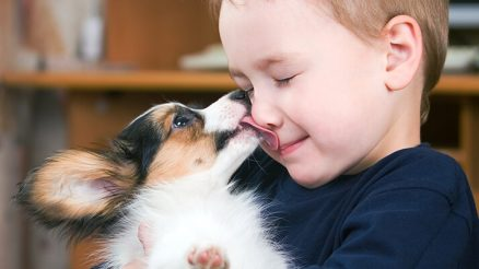 Best Dogs for Kids and Families