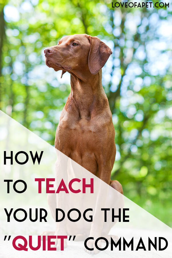 """How to Teach Your Dog the """"Quiet"""" Command"""