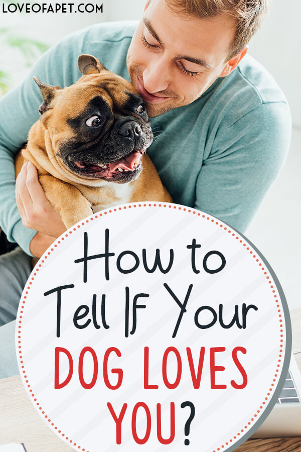 10 Signs Your Dog Loves You More Than Anything