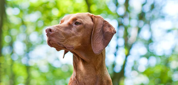 How to Teach Your Dog the Quiet Command