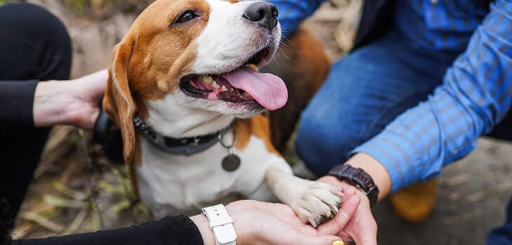 How to Care for Your Dog's Paws: 8 Tips