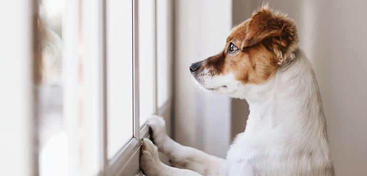 How to Train Your Dog to Stay Home Alone: 7 Steps