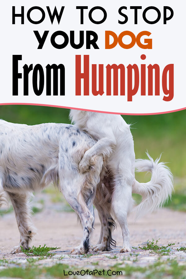 Reasons Why Dogs Hump and How to Stop It