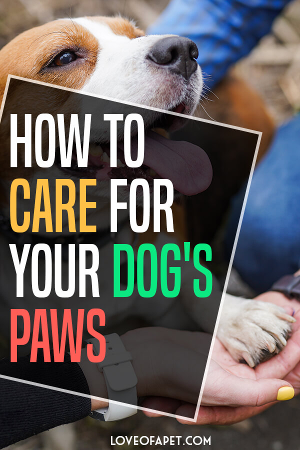 8 Tips on How to Care for The Paws of Your Dog