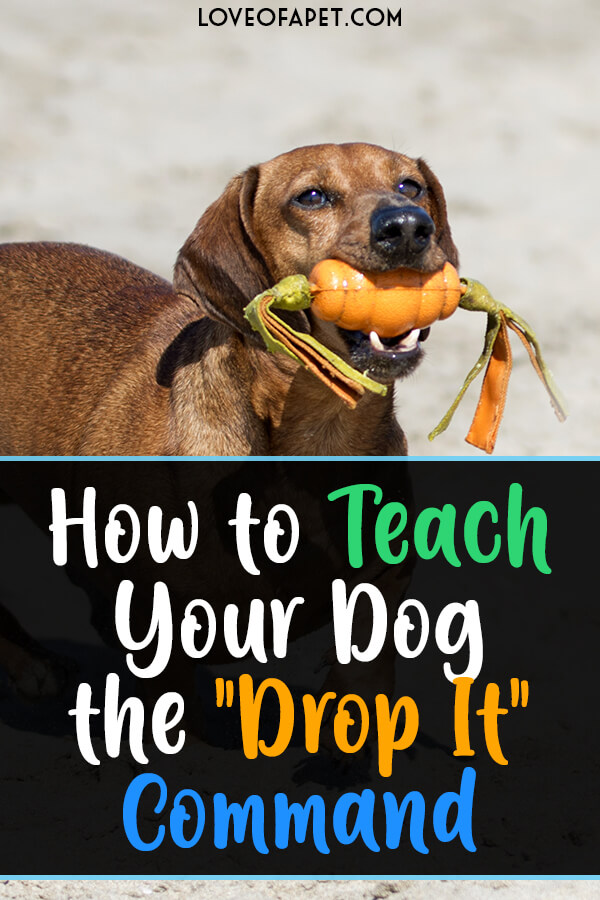 "Train Your Dog to Release or ""Drop It"" in 3 Steps"